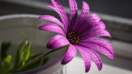 flower, purple, glass
