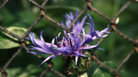 flower, purple, mesh