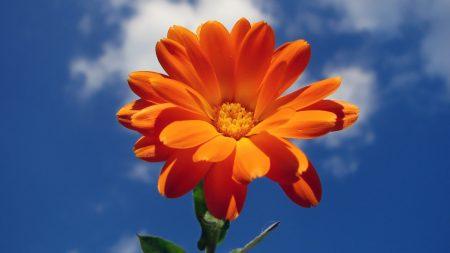 flower, red, sky