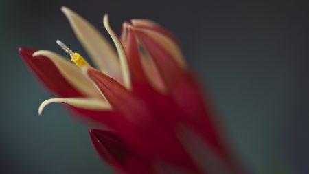 flower, shadow, petal