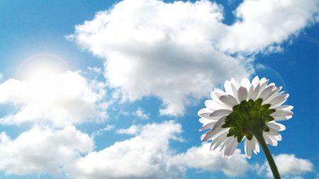 flower, sky, clouds