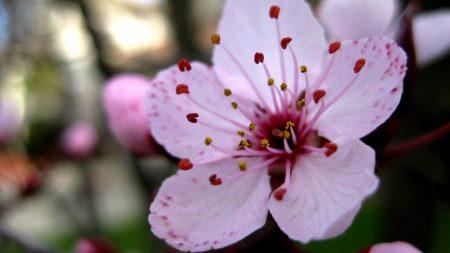 flower, stamen, close-up