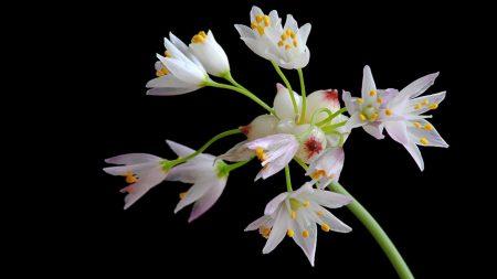 flower, stamen, stem