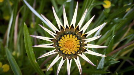 flower, star, grass