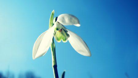 flower, stem, sky