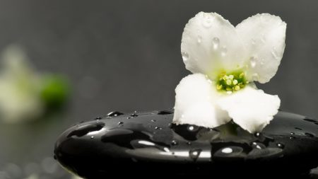 flower, stone, close-up
