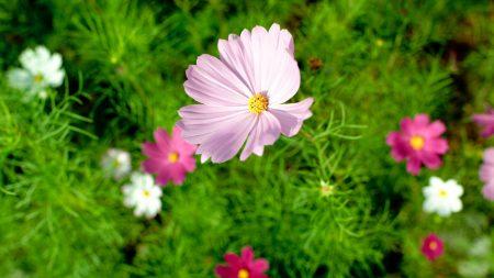 flower, summer, nature