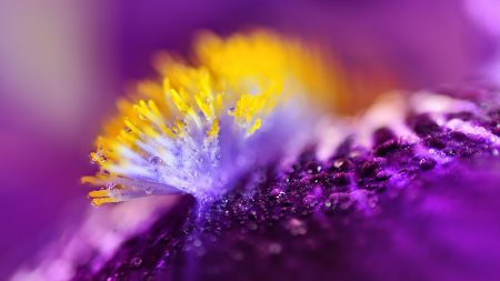flower, surface, drops