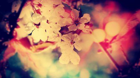 flower, tree, blossoms