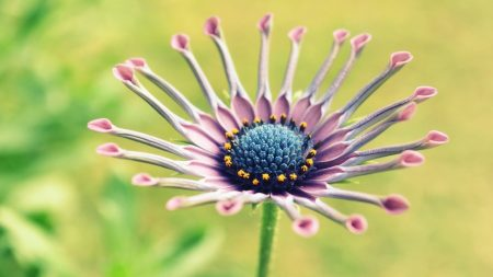 flower, unusual, beautiful