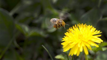 flower, yellow, bee