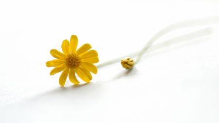 flower, yellow, bud