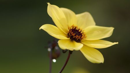 flower, yellow, close-up