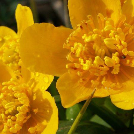 flower, yellow, petals