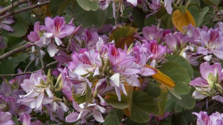flowering, flowers, branches