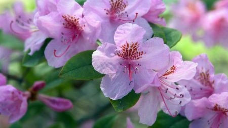 flowering, shrubs, branches