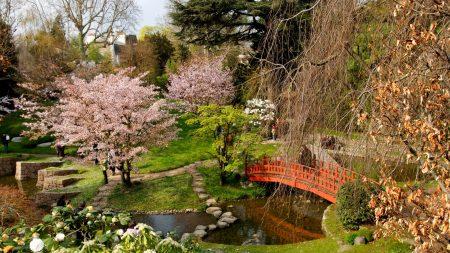 flowering, trees, bridge