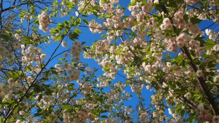 flowering, twigs, spring