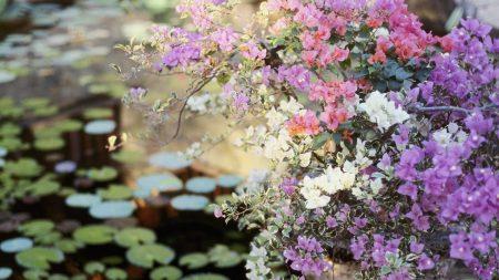 flowers, balcony, planters
