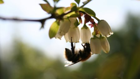flowers, bees, pollination