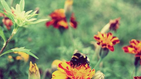 flowers, bees, striped