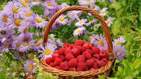 flowers, berries, raspberries