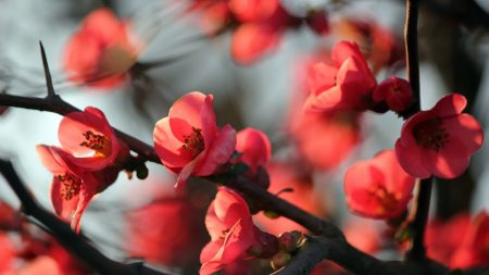 flowers, blossoms, spring