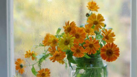 flowers, bouquet, bank