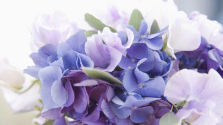 flowers, bouquet, set