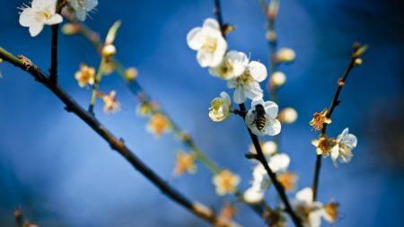 flowers, branch, bee