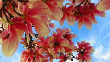 flowers, branch, sky