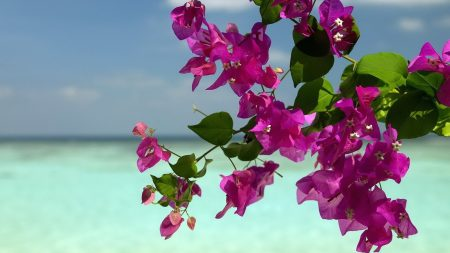 flowers, branches, island