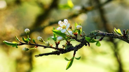 flowers, branches, tree