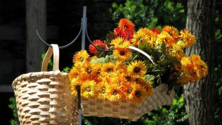 flowers, bright, lots