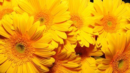 flowers, bright, yellow