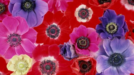 flowers, buds, loose