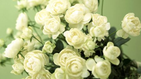 flowers, buds, white