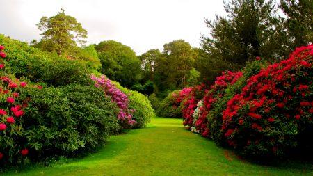 flowers, bushes, lawn