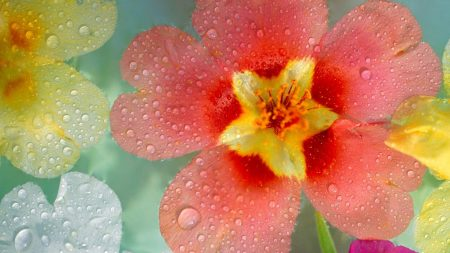 flowers, colorful, drops