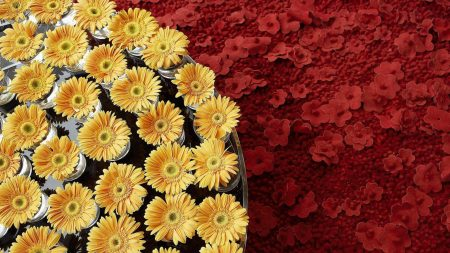 flowers, composition, tray