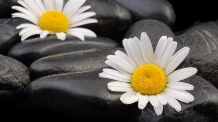 flowers, couple, stones