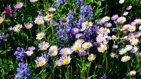 flowers, different, flowerbed