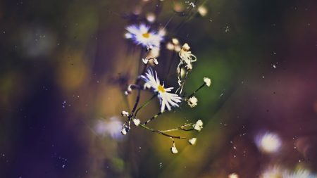 flowers, faded, grass