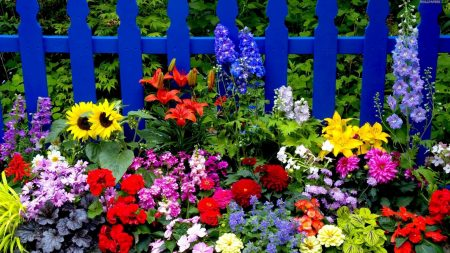 flowers, fence, different