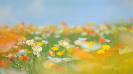 flowers, field, grass