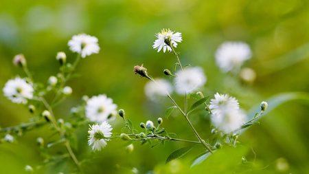 flowers, field, greens