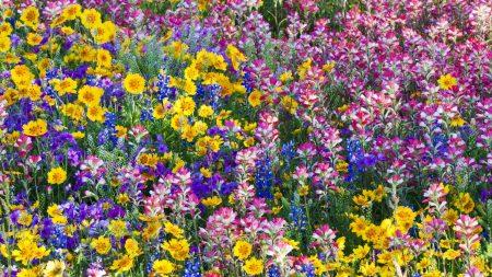 flowers, field, paint