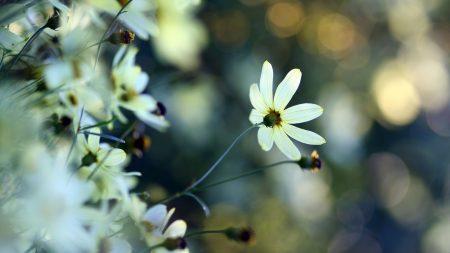 flowers, field, petals