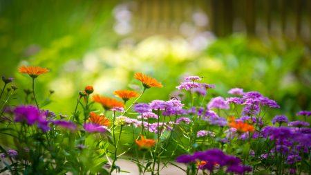 flowers, field, plants