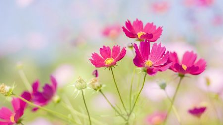 flowers, field, summer